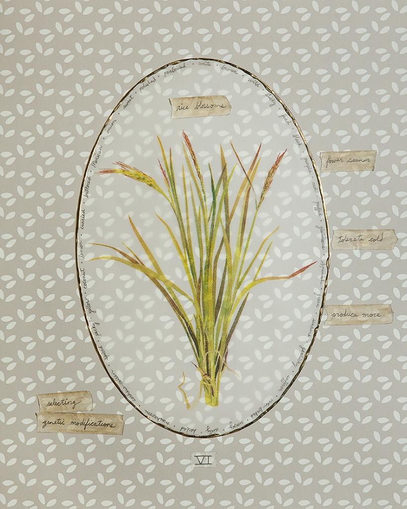 CBrinich-Langlois_RiceBlossoms